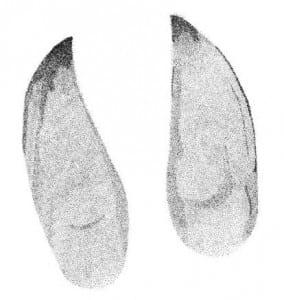 Moose tracks from Mark Elbroch's book