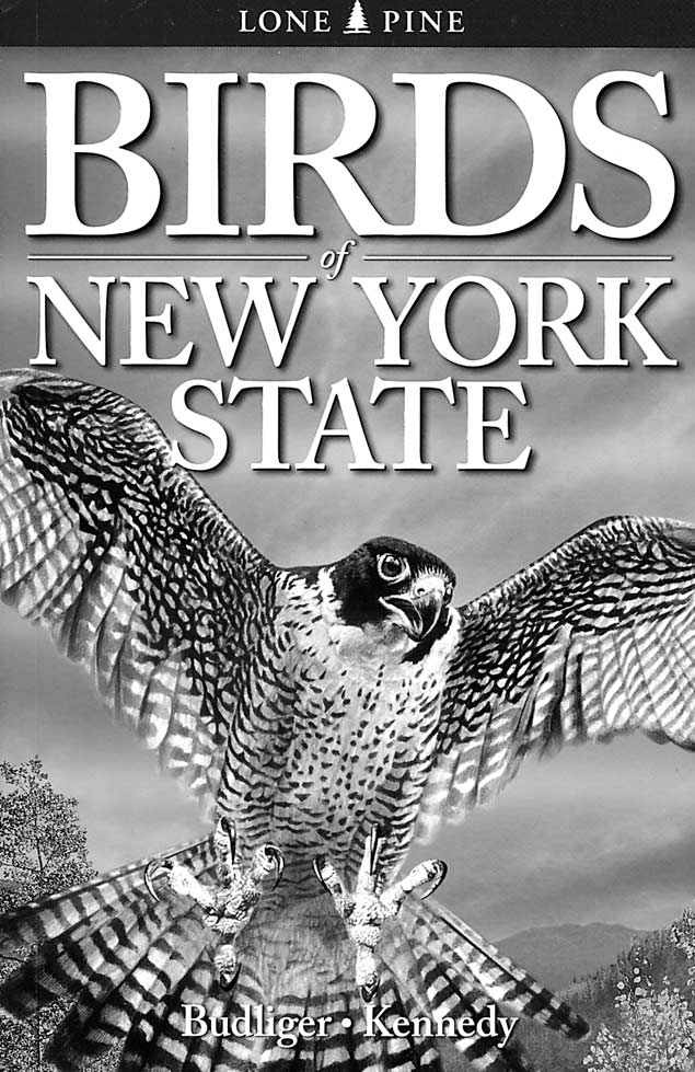 Birds Of New York State Adirondack Explorer