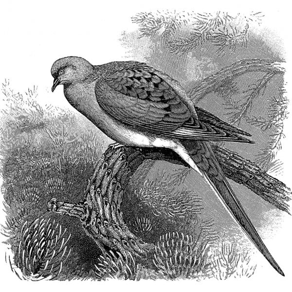 Ed Kanze's essay on the extinction of the passenger pigeon won an award from the John Burroughs Association.
