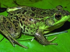 Retired DEC scientist wins award for book on reptiles, amphibians