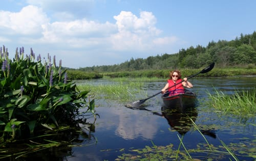 Paddling the weedy end of Fall Lake. Photo by Phil Brown.