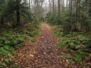The trail around Moss Lake is nearly ideal for running.