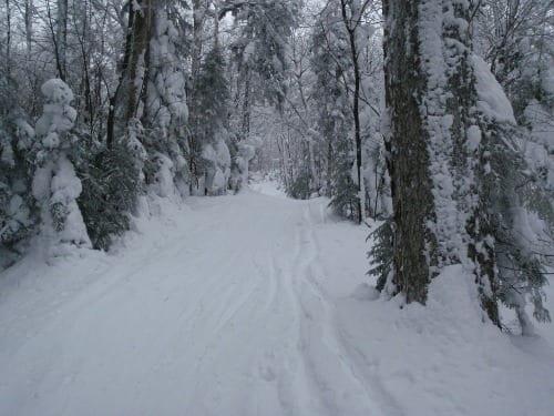 McKenzie Pass. Photo by Phil Brown.