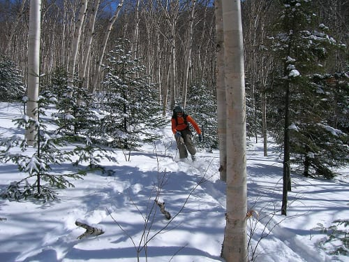 A backcountry skier descends a birch glade in the High Peaks. Photo by Susan Bibeau.