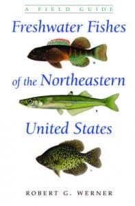 Freshwater Fishes of the Northeastern United States: A Field Guide By Robert G.Werner Syracuse University Press, 2004 Hardcover, 280 pages, $49.95