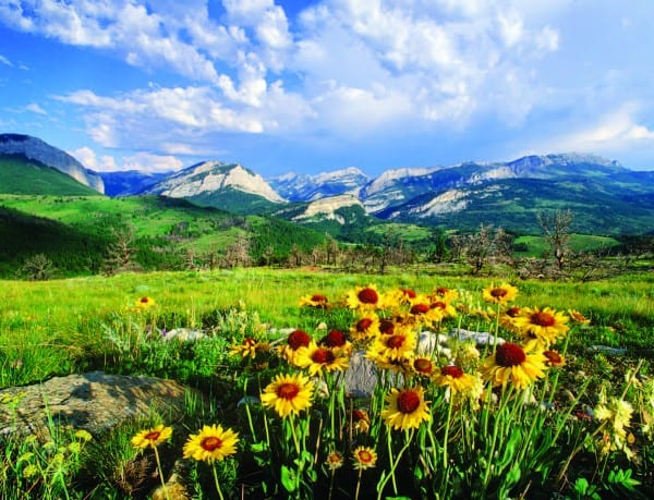 Summer wildflowers in the Rocky Mountains.