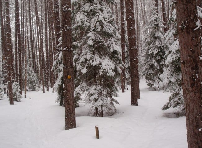 Fresh snow on the Jackrabbit Ski Trail in Saranac Lake. Photo by Phil Brown.
