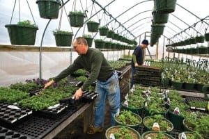"Rob Hastings, left, uses greenhouses and ""hoop houses"" to extend the growing season at Rivermede Farm in Keene Valley."