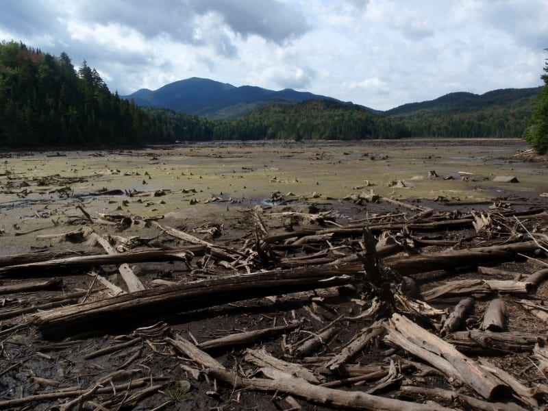 Mudflat at Duck Hole after Irene. Photo by Phil Brown.