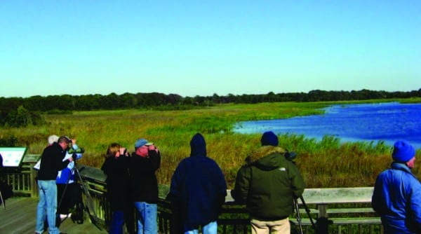 Cape May, New Jersey, attracts nearly as many birders as birds. Images courtesy of Princeton University Press