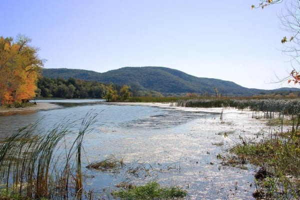 Chubbs Dock wetlands on southern Lake Champlain. Photo from NYSDEC.