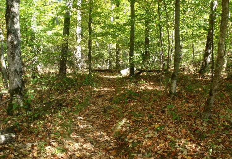 Baker Mountain trail in Saranac Lake.