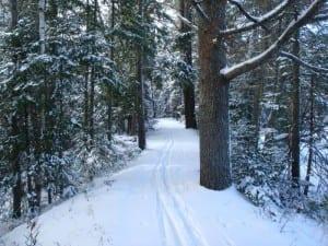Adirondack Visitor Interpretive Center ski trail