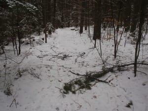 Fowlers Crossing trail to Oseetah Marsh in Saranac Lake.