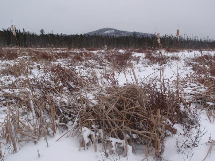 Oseetah Marsh in winter