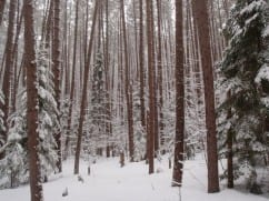 State and Protect disagree on tree-cutting limits