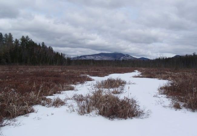 Oseetah Marsh on Monday, looking toward McKenzie Mountain. Photo by Phil Brown.
