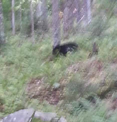 Stafford took this bear's photo with her cell phone.