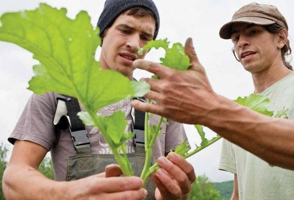 Ian Ater and Lucas Christenson grow organic produce on Fledgling Crow Farm. Photo by Ben Stechschulte