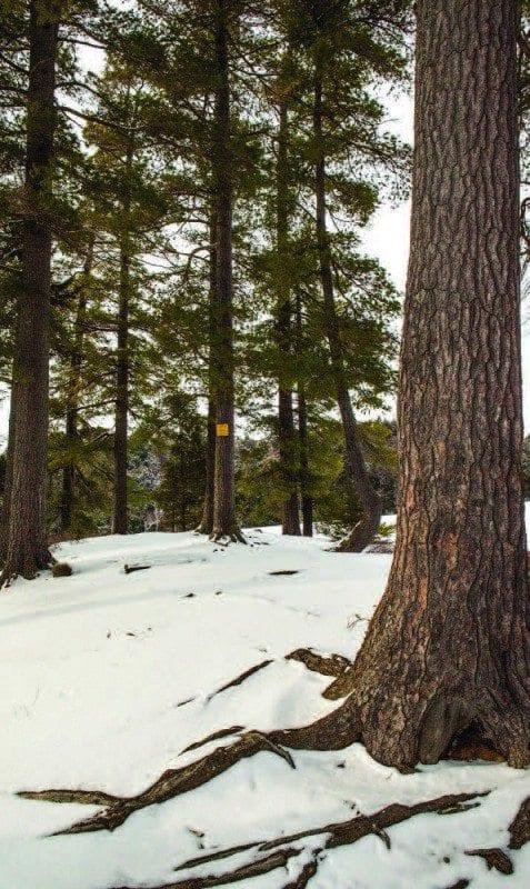 Hemlocks and pines often grow along the carries. Photo by Nancie Battaglia