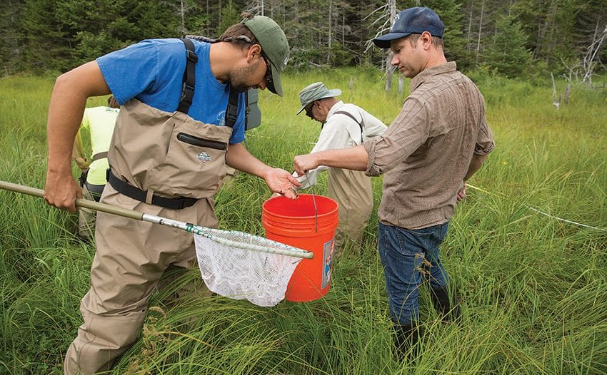 Scientist Spencer Bruce, right, collects brook trout for his statewide genetic study. Photo by Mike Lynch