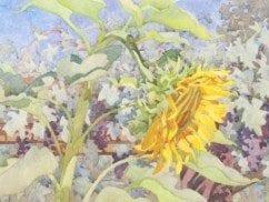Carolyn-Lord_Mammoth-Sunflower-300x202