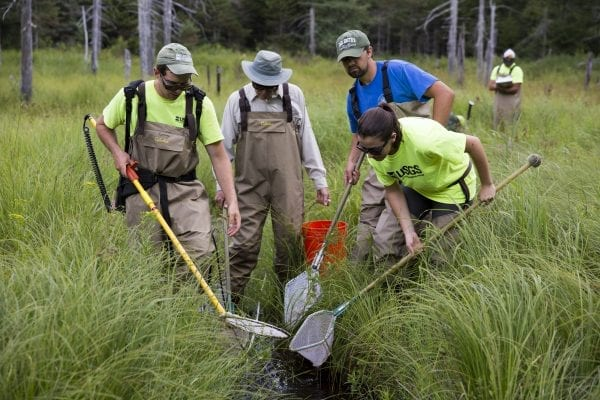 A U.S.G.S. crew looks for brook trout in a small stream in the southwestern Adirondacks.