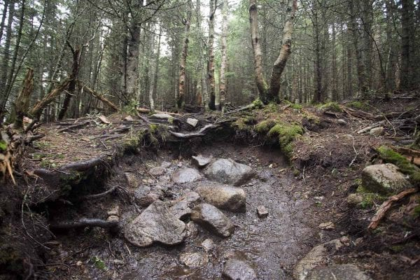 Much of the trail on Giant Mountain is in good shape. Here is an eroded section.