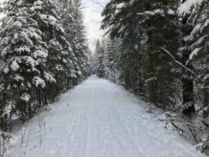 Bloomingdale Bog Trail