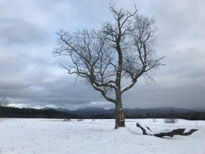 Adirondack snow
