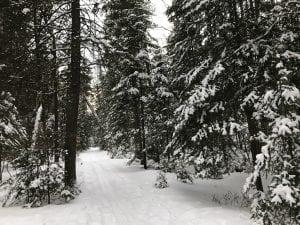 Jackrabbit Ski Trail