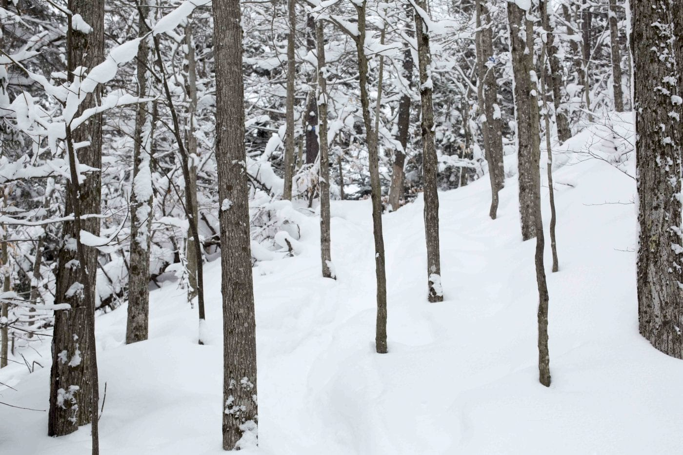 Winter hiking food tips for beginners