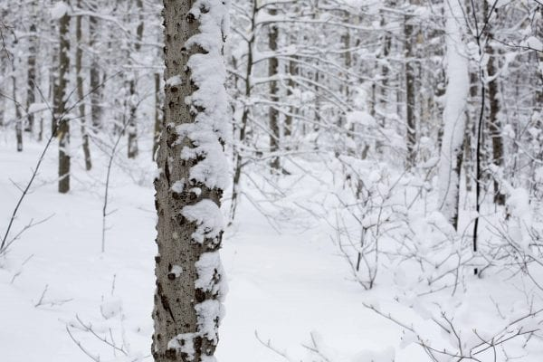 Coney Mountain is a popular hiking destination near Tupper Lake, but it can also be skied in the winter when there is a deep snowpack.