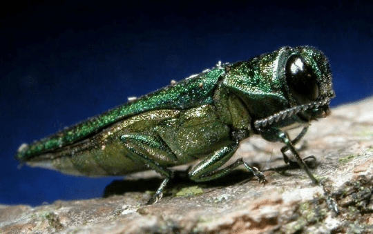 Stop forest pests at the source