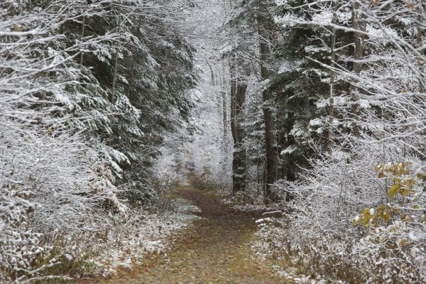 The northern Adirondacks have received several snowfalls this month, including on Tuesday. The Bloomingdale Bog near Saranac Lake was especially scenic this day. Photo by Mike Lynch