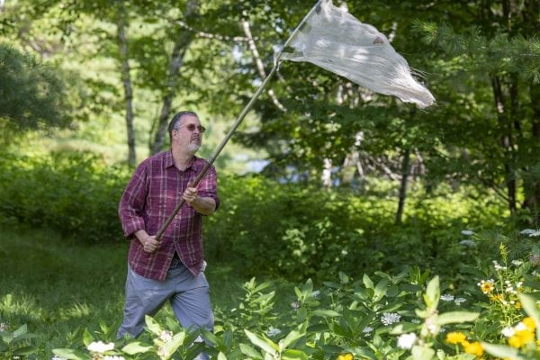 Dan Jenkins catches a monarch butterfly in his net. Photo by Mike Lynch