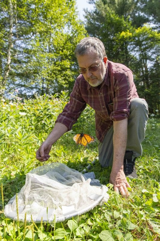 Dan Jenkins releases a monarch butterfly after catching in a net near his home on Upper Saranac Lake.  Monarchs and pollinators were the topic of a feature article in the September issue of the Explorer. Photo by Mike Lynch