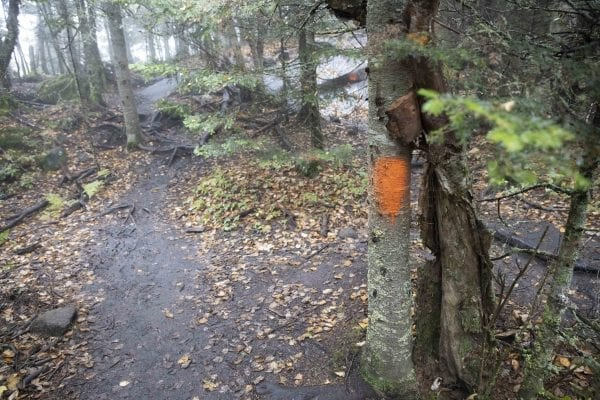 DEC is looking for information related to these orange paint blazes that recently showed up on the Cascade Mountain trail. Photo by Mike Lynch