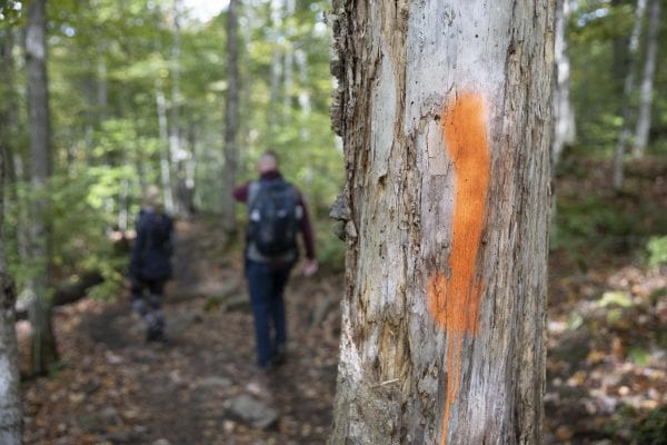 DEC is looking for information related to these orange paint blazes that recently showed up on the Cascade Mountain trail in late September. Photo by Mike Lynch