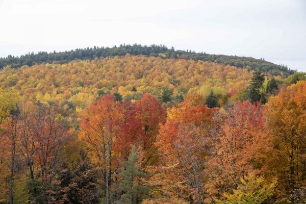 Fall foliage in the Ticonderoga area. Photo by Mike Lynch