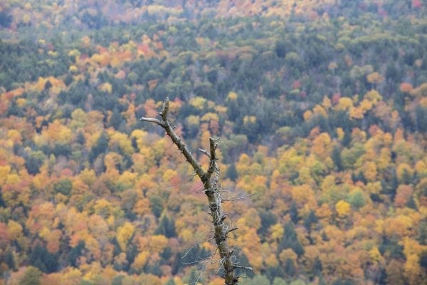 Fall foliage as seen from Anthony's Nose. Photo by Mike Lynch