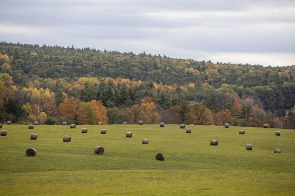 Hay bales in a field in Washington County on the eastern side of Lake George. Photo by Mike Lynch