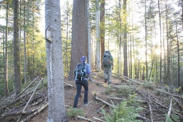 Tracy Ormsbee and Sam Eddy walk through the Five Ponds Wilderness. Photo by Mike Lynch