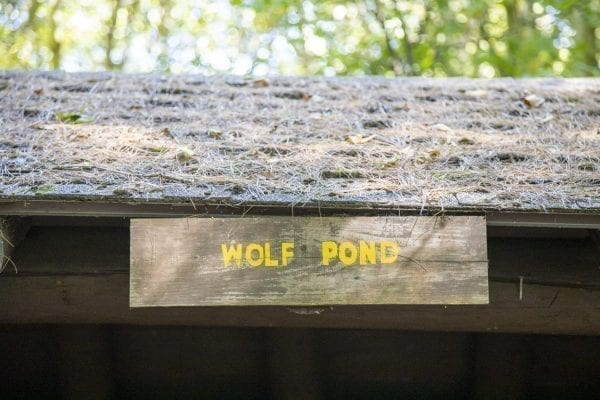 The Wolf Pond lean-to in the Five Ponds Wilderness. Photo by Mike Lynch