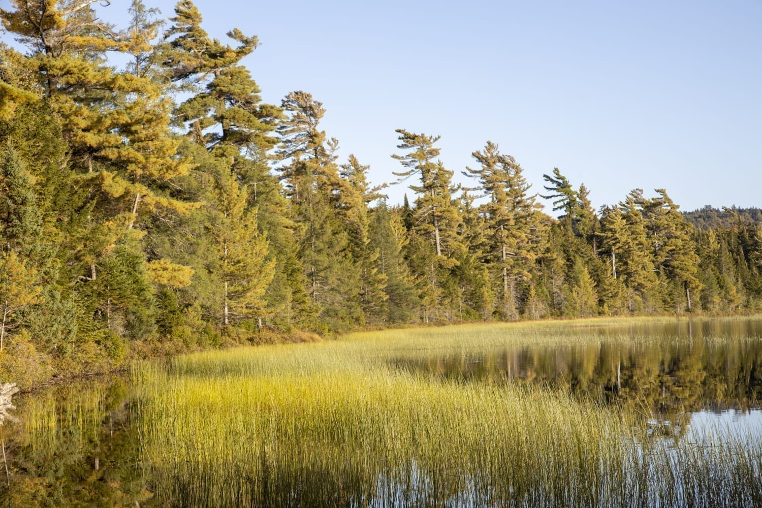An Adventure in the Five Ponds Wilderness