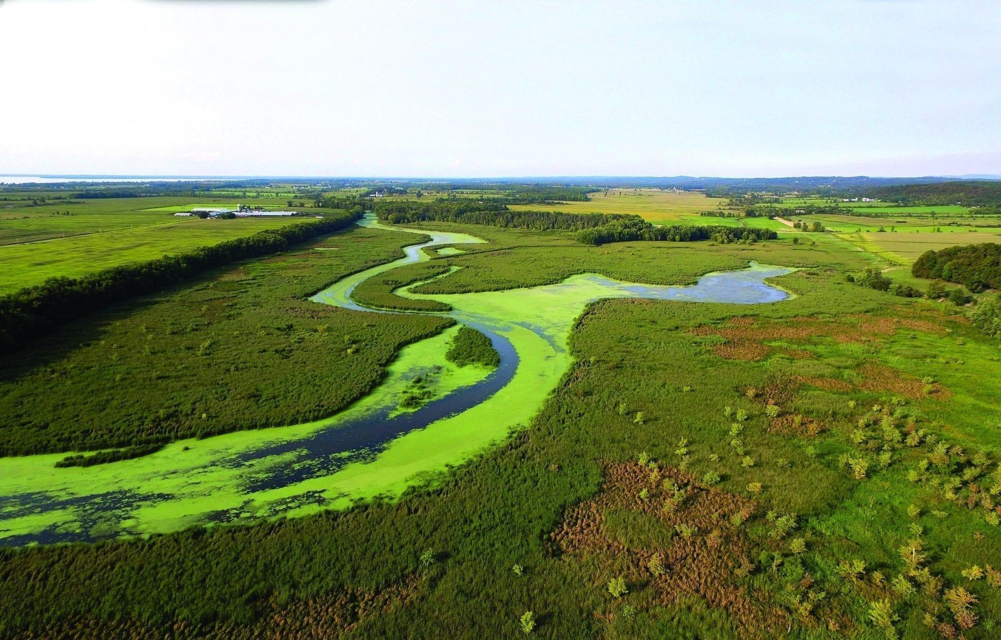 Champlain algae