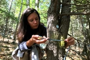 Adirondackers on guard against forest pests