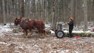 Horse Logging in Willsboro