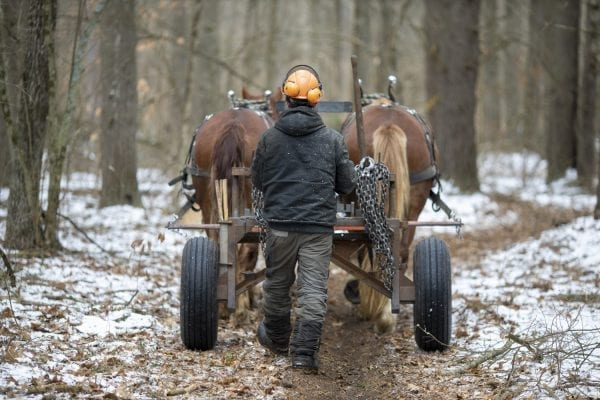 """Chad Vogel of Reber Rock Farm uses a pair of draft horses to harvest timber in Willsboro in January. Horse logging, Vogel told the Explorer, """"is a great solution for conserving the land while still producing the forest products we all need."""" His carbon footprint is represented by a can of gas for his saw, and a couple bottles of bar and chain oil. And the difference in woodlots that have been logged and those that have not can be difficult to tell. The trees to be harvested have been carefully selected, and since immediate profit and efficiency are not the primary goals, Vogel removes less desirable trees first, letting high-quality trees size up for future logging, while opening the canopy for smaller hardwoods that will pop when given light and space. See the full story by Tim Rowland in the March issue of the Explorer. Photo by Mike Lynch"""