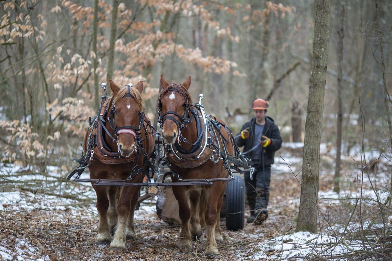 Workhorses Of Sustainability Adirondack Explorer